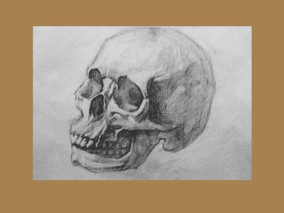 头骨素描写生步骤